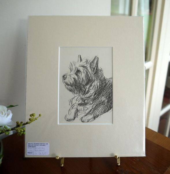 Little  dark Cairn - Ca D5 -  head & shoulders 1940's print by Lucy Dawson